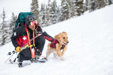 Avalanche dog training at Arapahoe Basin Ski Area.