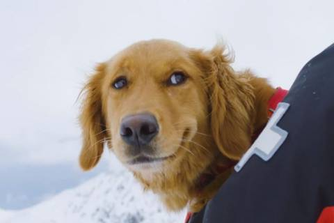 Avalanche Dog at Arapahoe Basin Very Pleased with its Workday