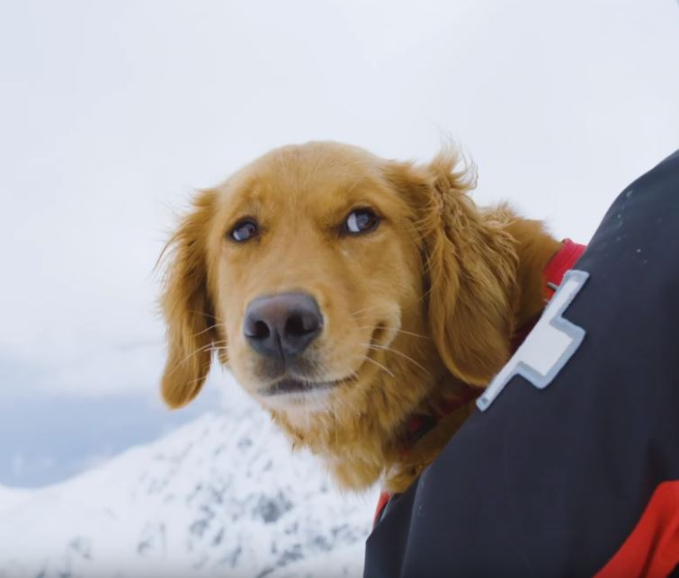 abasin doggos.JPG