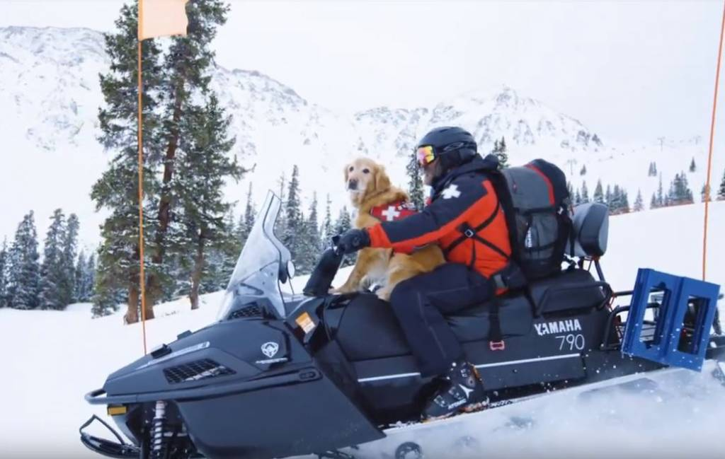 abasin snow dogs.JPG